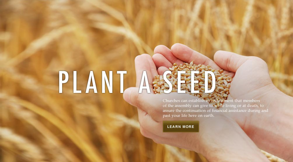 Plant A Seed (hands with grains)
